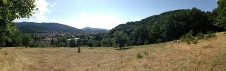 Wiese Pano